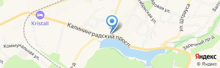 Сеть магазинов оптики на карте Светлогорска